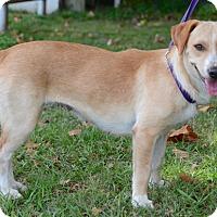 Adopt A Pet :: Sandy - Groton, MA