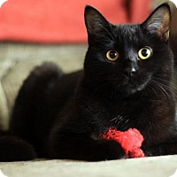 Adopt A Pet :: Sophia - Palo Alto, CA