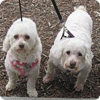Adopt A Pet :: Lily & Mia - Vista, CA
