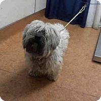 Adopt A Pet :: A679618 - Sacramento, CA