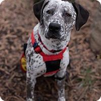 Adopt A Pet :: May - Washington, DC