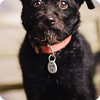 Adopt A Pet :: Cracker Jack - Portland, OR