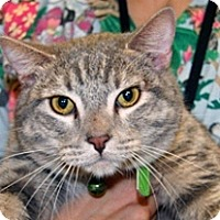 Adopt A Pet :: Tommy O'Malley - Wildomar, CA