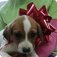 Adopt A Pet :: Rabbi - Erwin, TN