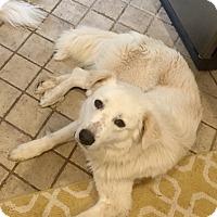 Adopt A Pet :: Jake - Tulsa, OK