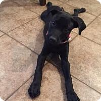 Adopt A Pet :: Molly - Conroe, TX