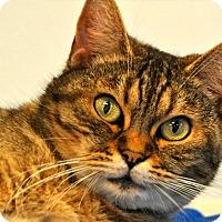 Adopt A Pet :: Asia - Long Beach, CA
