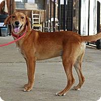 Adopt A Pet :: Buster - Leslie, AR