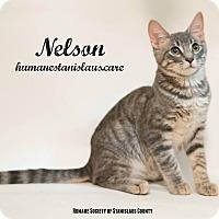 Adopt A Pet :: Nelson - Modesto, CA