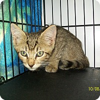Adopt A Pet :: Ford - Mexia, TX