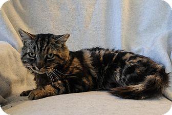 Domestic Mediumhair Cat for adoption in Wayne, New Jersey - Linus