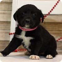 Adopt A Pet :: Barbara - Waldorf, MD
