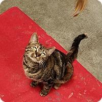 Adopt A Pet :: Curry - Basehor, KS