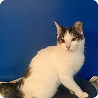 Adopt A Pet :: Holli - Summerville, SC