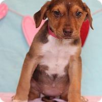 Adopt A Pet :: Zelgai - Waldorf, MD