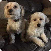 Adopt A Pet :: Willy and Silas - Doylestown, PA