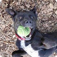 Adopt A Pet :: JAZZY - McKinleyville, CA