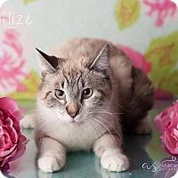 Adopt A Pet :: Alize - Phoenix, AZ