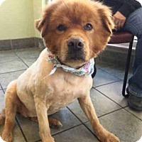 Adopt A Pet :: A422519 - San Antonio, TX