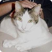 Adopt A Pet :: Patsy - Pasadena, CA