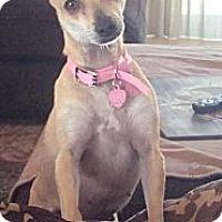 Adopt A Pet :: Jassie - Winchester, CA