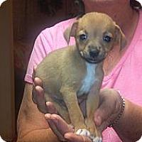 Adopt A Pet :: Pecan - Hazard, KY