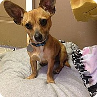 Adopt A Pet :: Babs - Knoxville, TN