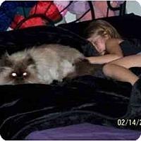 Adopt A Pet :: Dutch - Davis, CA