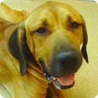 Adopt A Pet :: Sunny - Palm City, FL