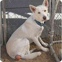 Adopt A Pet :: Shadow - Golden Valley, AZ