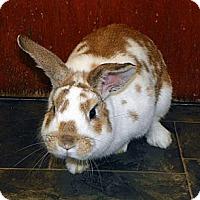 Adopt A Pet :: Logan - North Gower, ON
