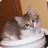 Adopt A Pet :: Rhianna - Dover, OH