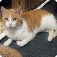 Adopt A Pet :: Morris - Alexandria, VA