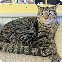 Adopt A Pet :: Patrick - Marseilles, IL