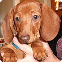 Adopt A Pet :: Maureen-Pending Adoption - Omaha, NE