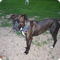 Adopt A Pet :: Sassy - Baraboo, WI