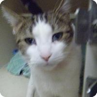 Adopt A Pet :: Mookie - Hamburg, NY