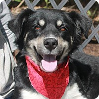 Adopt A Pet :: Bridget-ADOPTED! - Garfield Heights, OH