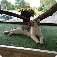 Adopt A Pet :: Aubrey - Maryville, IL