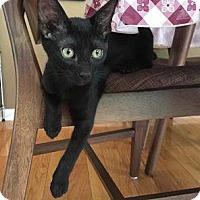 Adopt A Pet :: Todd - Denver, CO