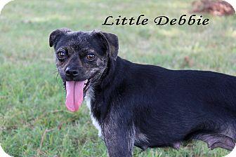Terrier (Unknown Type, Small) Mix Dog for adoption in Texarkana, Arkansas - Little Debbie