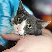 Adopt A Pet :: Cooper K - Raleigh, NC