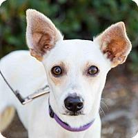 Adopt A Pet :: Ballou - San Diego, CA