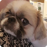 Adopt A Pet :: Mr. Pickles - Davison, MI