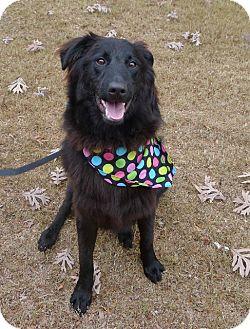 Shepherd (Unknown Type) Mix Puppy for adoption in Helena, Alabama - Lareina