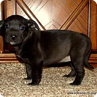 Adopt A Pet :: SABRINA - parissipany, NJ