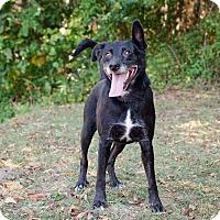 Adopt A Pet :: Zollie - Sherman, CT