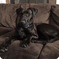 Adopt A Pet :: Titan - Rosamond, CA