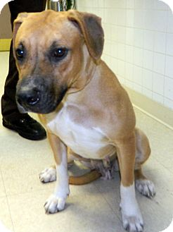 Hound (Unknown Type) Mix Dog for adoption in Tinton Falls, New Jersey - Sox