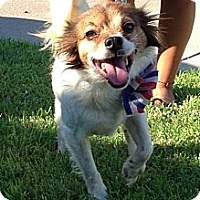 Spaniel (Unknown Type) Mix Dog for adoption in Lake Forest, California - JD